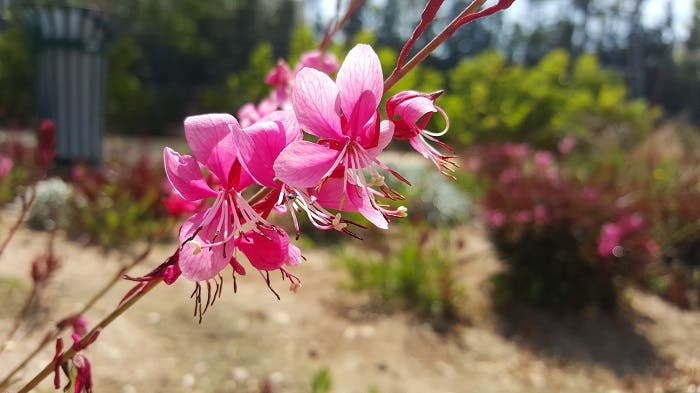 Samsung Galaxy S6 flor