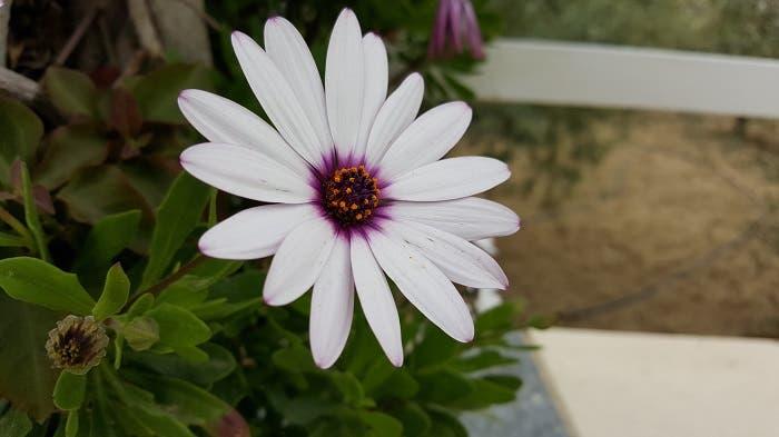 flor galaxy s6 edge