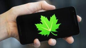 logo de greenify en móvil