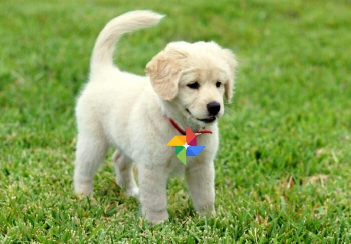 Google Fotos ya reconoce a tus mascotas y te muestra todas sus fotos
